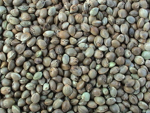 Hemp Seeds Small